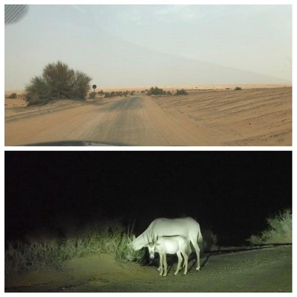 ドバイのアルマハホテルまでの砂漠道