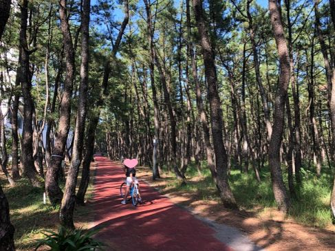 シェラトン宮崎でレンタル自転車してサイクリングした写真