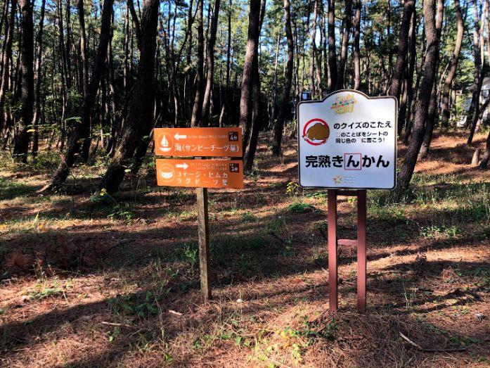 松林のウォーキングコース